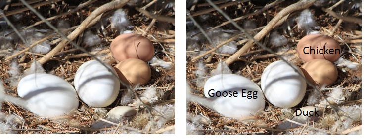 Communal Nest Color