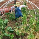 Hoop Houses at WB Elementary Garden